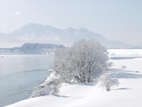 北信州「千曲川」、厳冬の朝「木花」=樹氷。
