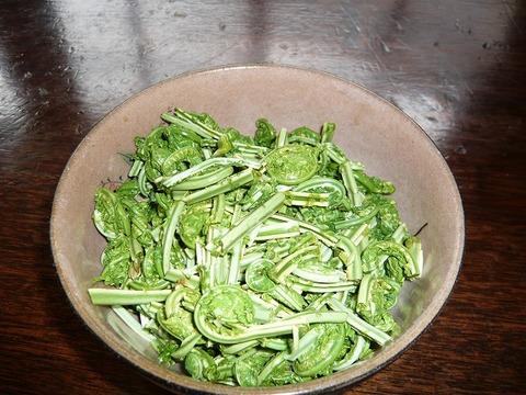 温泉で茹でると美味しい。春の山菜「こごみ」